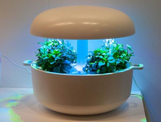 Smart garden on desk