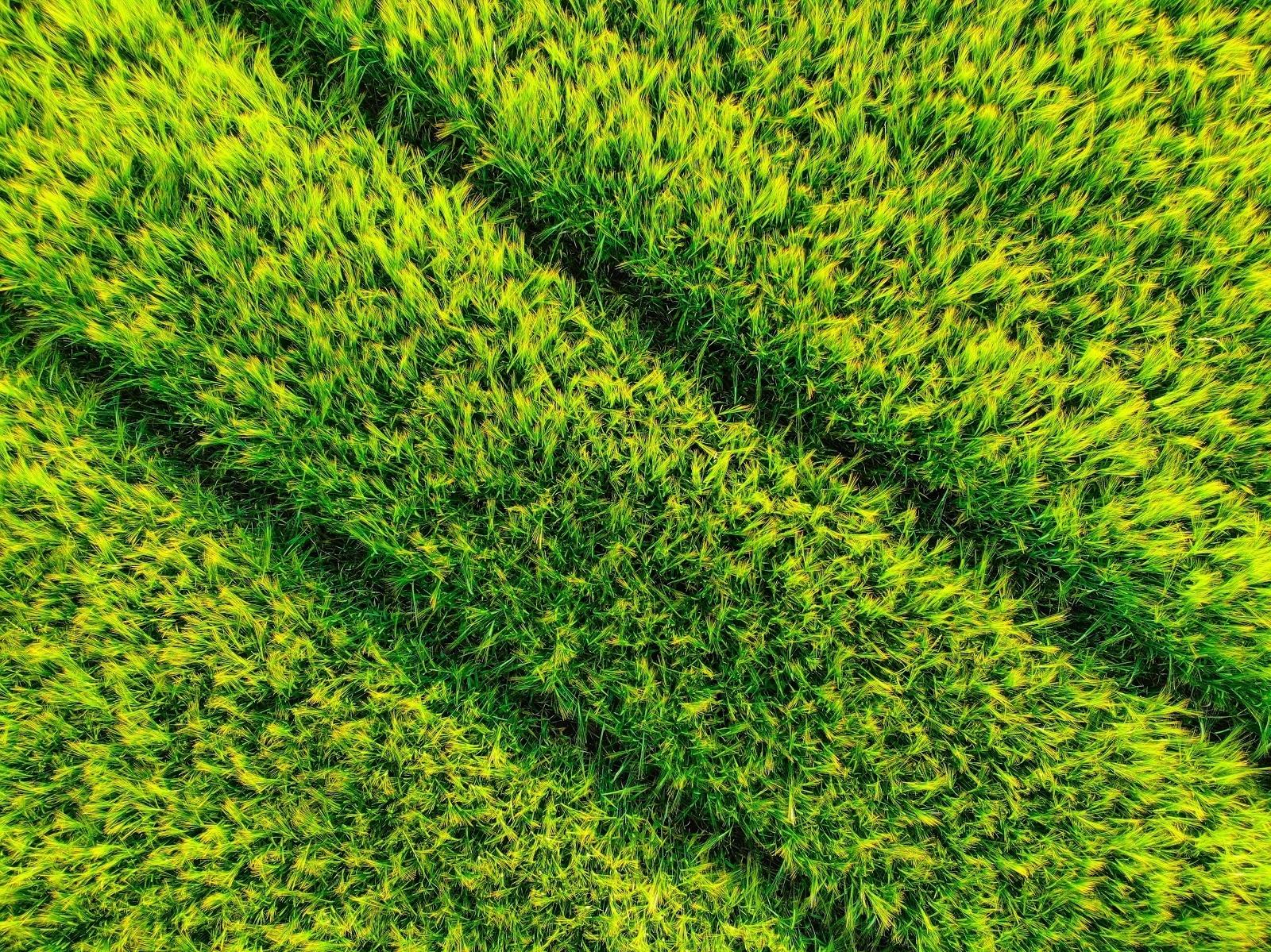 Renewable energy - biomass energy