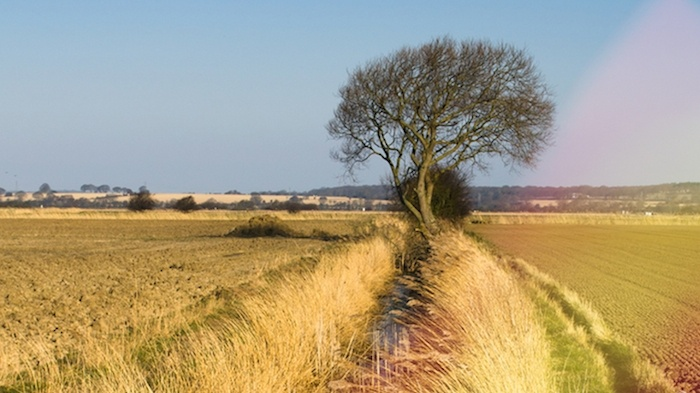 Countryside near Dungeness