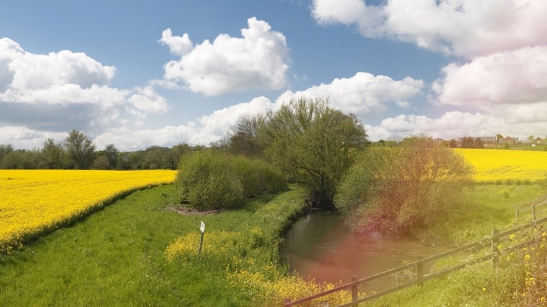 Countryside near Sizewell