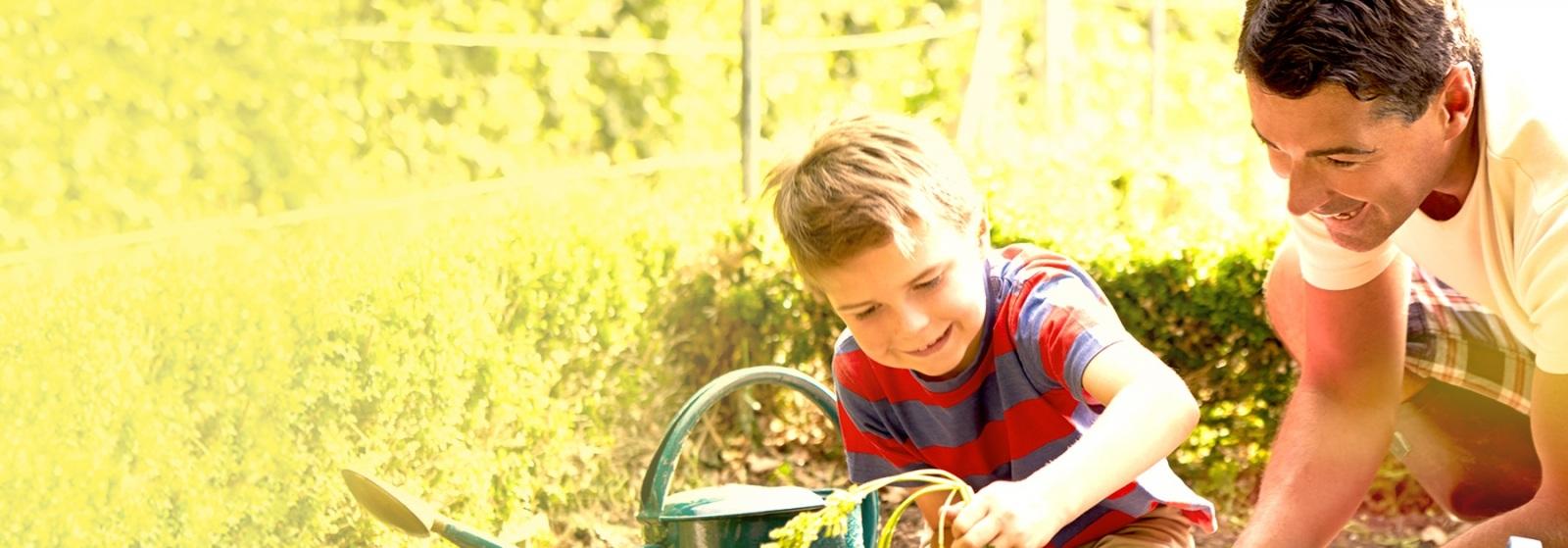Boy in a garden harvesting carrots