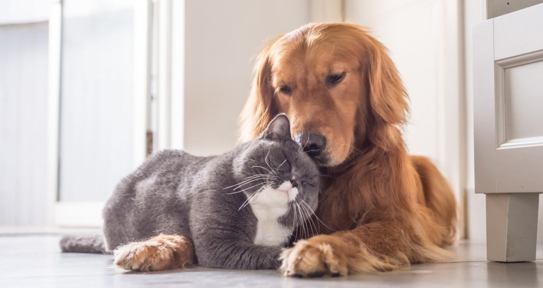 cat and dog showing affection