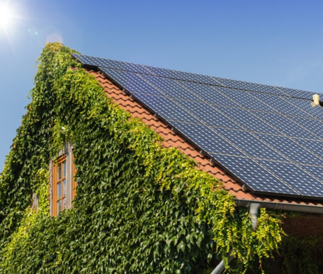 solar panels on roof with ivy