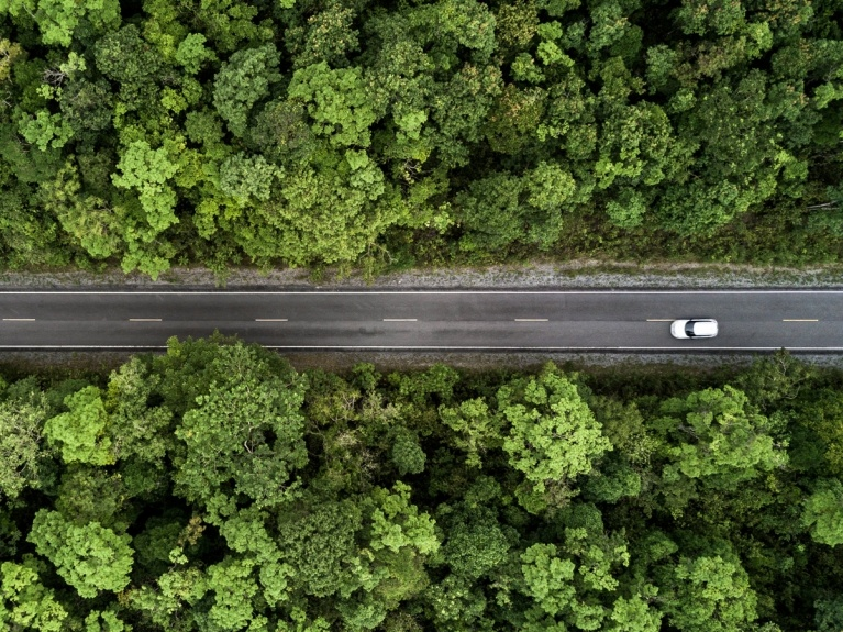 car driving on a tree lined road