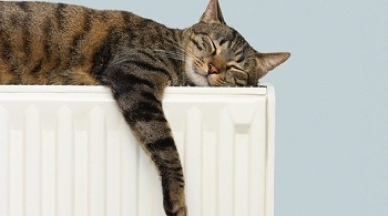 EDF Energy boiler cover - Cat asleep on a radiator