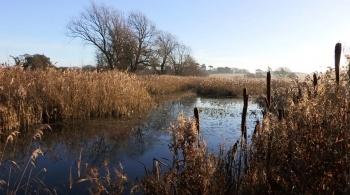 Watch video: Aldhurst Farm heathland and wetland habitat