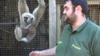 Watch video: Hinkley Point C Community Fund – Tropiquaria Zoo, Williton